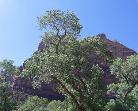 Red rock cliffs bathed in the afternoon sunlight framed by trees at Zion National Park, Utah.