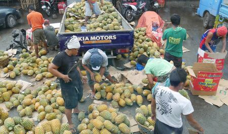 Tagum City, Philippines- March 2016: Cropped shot of people picking out pineapple fruits outside the public market in Tagum City. Stockfoto