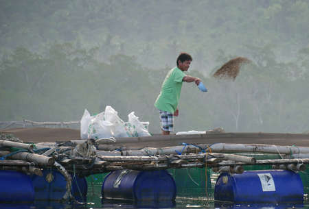 DAVAO ORIENTAL, PHILIPPINES—A man throws feeds the fish in a commercial farm in Davao Oriental in March 2016. 報道画像
