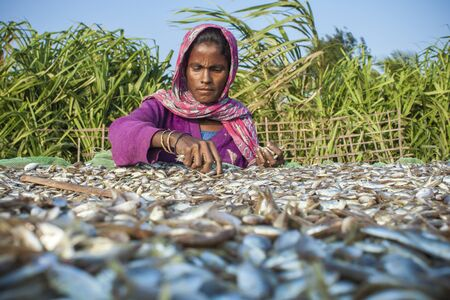 labouring: The southernmost part of Bangladesh St. Martins Island. It is a small island in the northeastern part of the Bay of Bengal a women workers is busy to drying fish under the sun.
