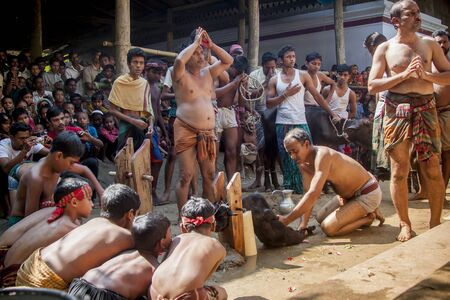sacrificed: Hindu festival Durga Puja's another big part about Kali Puja, Traditionally, a goat or Buffalo used to be sacrificed at Kali Puja and this ritual was called patha boli. A goat on the occasion of Navami Netrokona, Bangladesh.