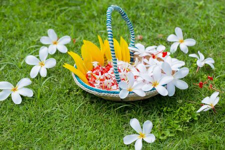 A flower basket made of bamboo sticks and fiber. Green Grass flowers Background. Summer flowers.