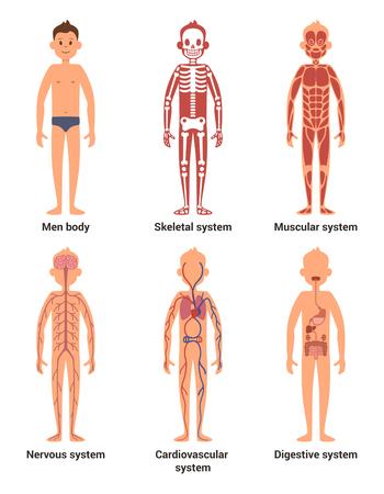 Sistemas Del Cuerpo Humano Infografía Médicos. Fisiología Y ...