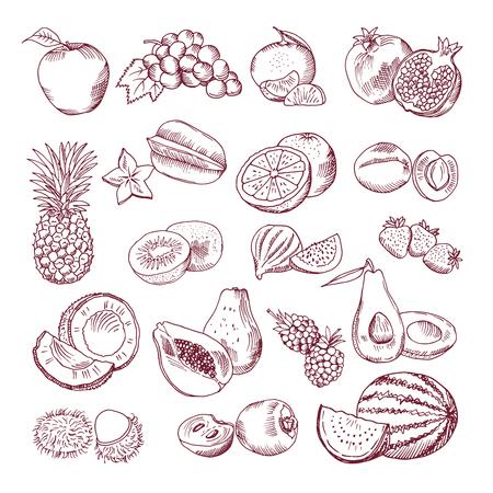 新鮮でジューシーな果物。ベクターの手描きイラストを白い背景に分離します。落書き写真セット