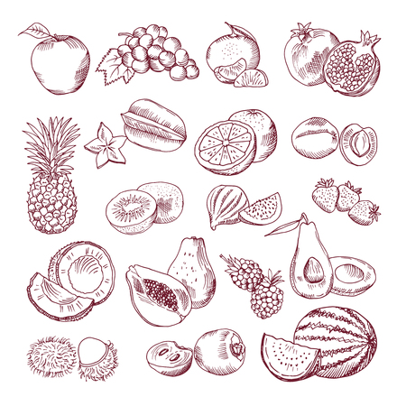 Fresh and juicy fruits. Vector hand drawn illustration isolate on white background. Doodle pictures set Illustration