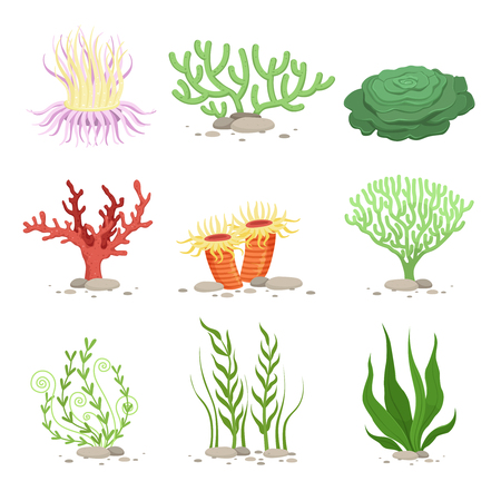 Vector set of underwater plants. Funny illustrations in cartoon style isolate on white Vettoriali