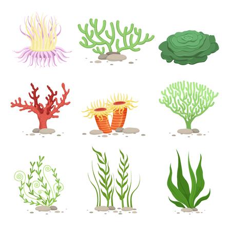 Vector set of underwater plants. Funny illustrations in cartoon style isolate on white Stock Illustratie
