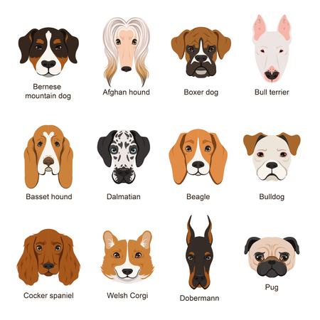 Cani diversi. Illustrazioni vettoriali set isolare su bianco Archivio Fotografico - 80250009