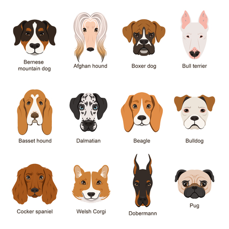 Different dogs. Vector illustrations set isolate on white