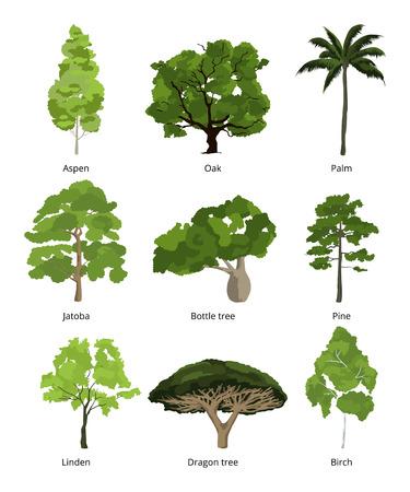 collection de palmiers d & # 39 ; arbres abstraits et des palmiers exotiques isolé sur blanc