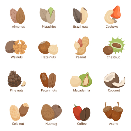 Vector illustration of different nuts. Vector set isolate Imagens - 80499525