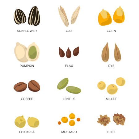 pumpkin seeds: Different seeds isolated