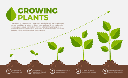 Different steps of growing plants Vector illustration in cartoon style Vettoriali