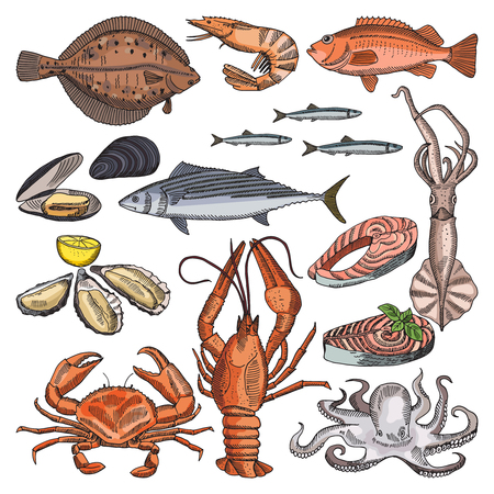 Illustrations of sea food products for gourmet menu. Vector pictures of squid, oyster and different fishes Illustration