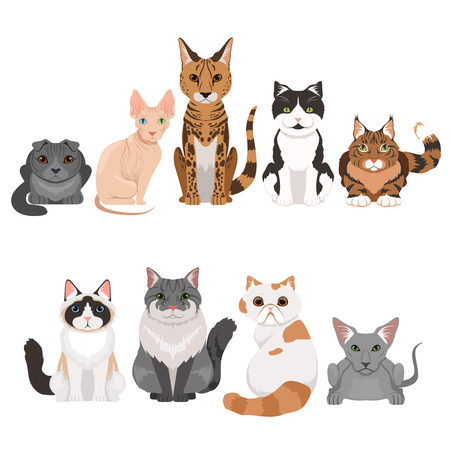 Vector illustrations set of many different kittens. Cats characters in cartoon style Illustration