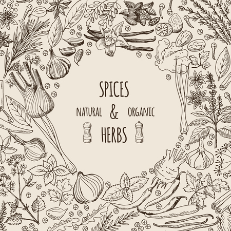 Healthy background illustrations with spices and herbs. Hand drawn pictures with place for your text