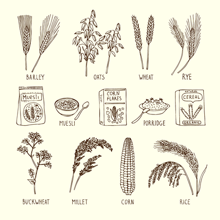 Vector set of different cereals. Muesli, wheat, rice and others. Hand drawn illustrations