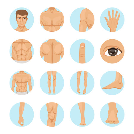 Vector human. Different parts of man body Illustration