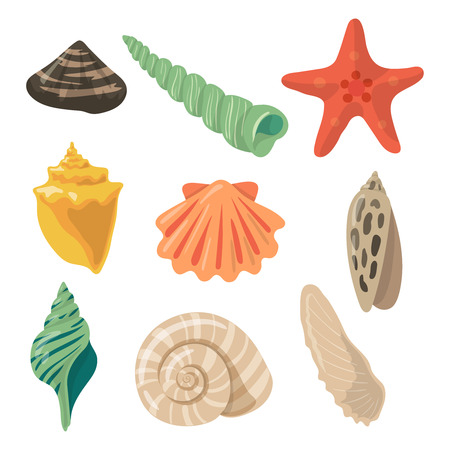 Summer tropical objects. Marine shells in cartoon style. Vector pictures set