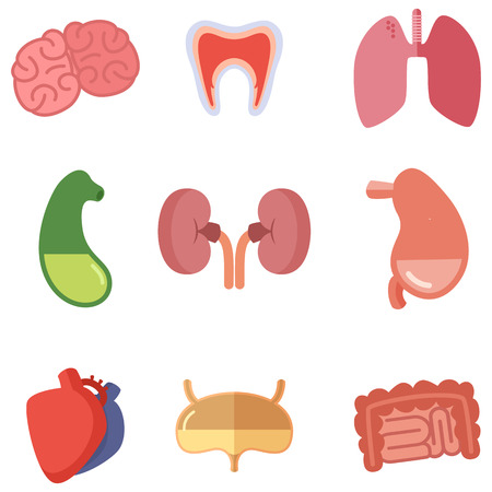 Human internal organs on white background. Vector icons set in cartoon style Illustration