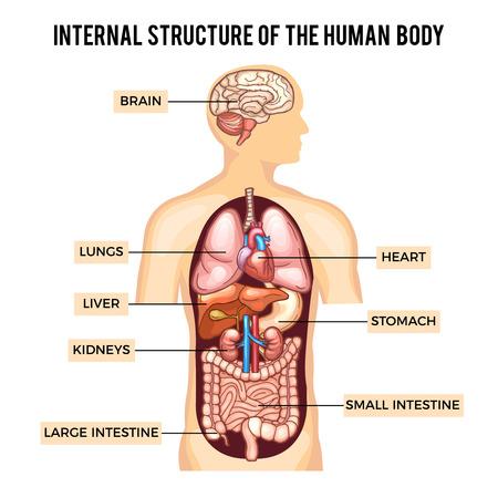 Rganos Iconos Humanos Con Infografías Figura Masculina Establecer ...