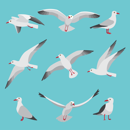 Set illustrations of atlantic seagulls in cartoon style.