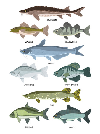 Vector collection of different kinds of freshwater fish