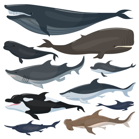 Whales, dolphins sharks and other nautical mammals animals