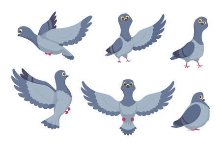 Vector collection of cartoon pigeons. Illustration of bird animal, dove with wings in flight