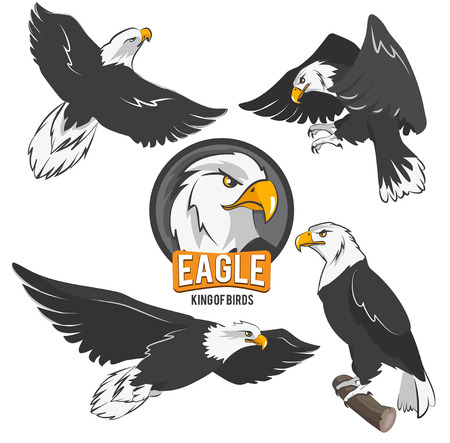 Set of cartoon eagles in different action poses. Vector eagle animal flying illustration