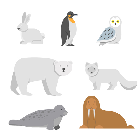 Vector illustrations of arctic snow animals. Arctic bear and penguin, north walrus and owl