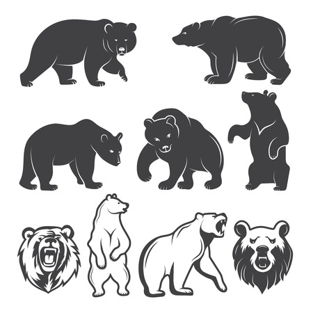 Illustrations of bears. Vector animals set. Animal bear wild, mammal grizzly