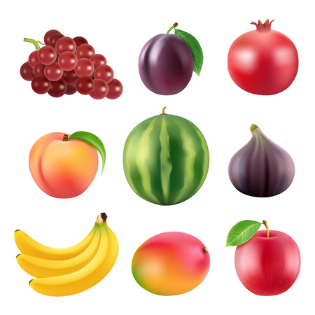 Realistic  illustrations of various fruits