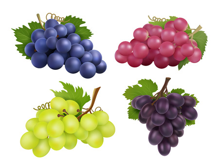 Realistic grapes.   set of various grape variety