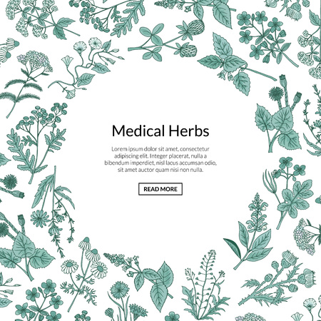 Vector hand drawn medical herbs background with place for text illustration. Herb plant aromatic, botany aroma, healthy and freshness flora Illustration