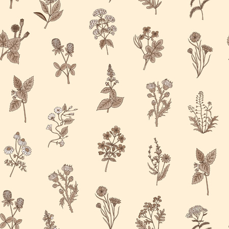 Vector hand drawn medical herbs pattern or background illustration
