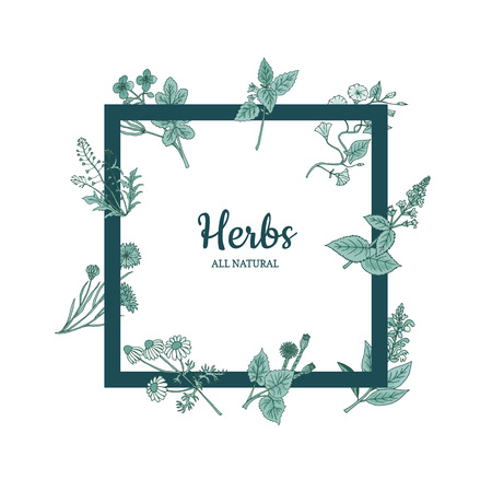 Vector hand drawn medical herbs flying around frame with place for text illustration Stock Illustratie