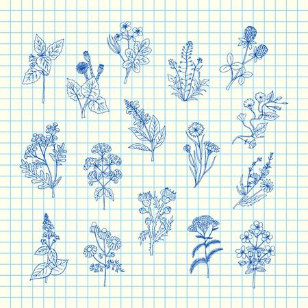 Herbes médicales dessinées à la main de vecteur sur illustration de fond de feuille de cellule bleue. Herb médical et naturel, plantes de doodle dessinées Vecteurs