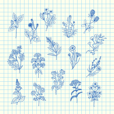 Vector hand drawn medical herbs set on blue cell sheet background illustration. Herb medical and natural, sketch drawn doodle plants Иллюстрация