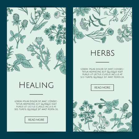 Set of vector hand drawn medical herbs web banner and poster templates illustration