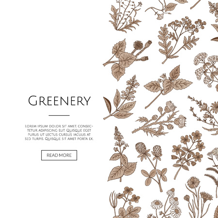 Vector hand drawn medical herbs background with place for text illustration Ilustração