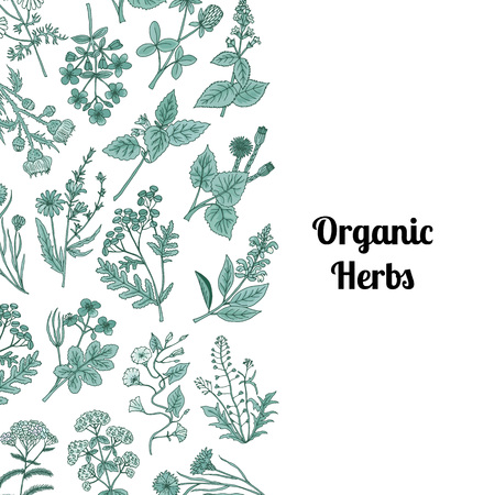 Vector hand drawn medical herbs background with place for text illustration Stock Illustratie