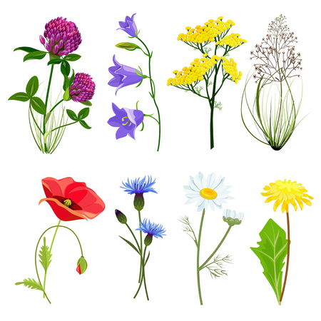 Wildblumen und Kräuter. Botanisches Set mit Aniswiesen-Butterblumenvektorsammlung im Karikaturstil. Botanische Blume, wilde Blumenblütenillustration