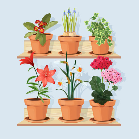 Flowers at shelves. Decorative tree plants grow in pots and standing in home interior at wooden shelves vector cartoon pictures. Flower pot blossom, plant gardening, flowerpot houseplant illustration