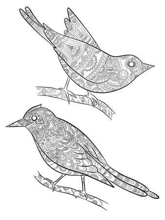 Coloring pages for adults. Little wild birds for with pattern vector illustration on body bird sitting on branch. Bird animal drawing on branch monochrome