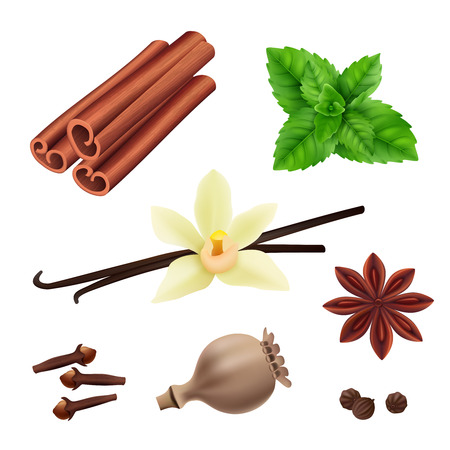 Herbs and spices. Cinnamon vegan leaves fresh vanilla seeds for cooking vector herbs realistic collection. Illustration of cinnamon and vanilla, leaf of mint