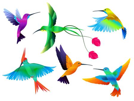 Tropical birds. Hummingbirds toucan colored parrot exotic birds zoo cartoon vector collection. Hummingbird tropical exotic, animal various bright illustration