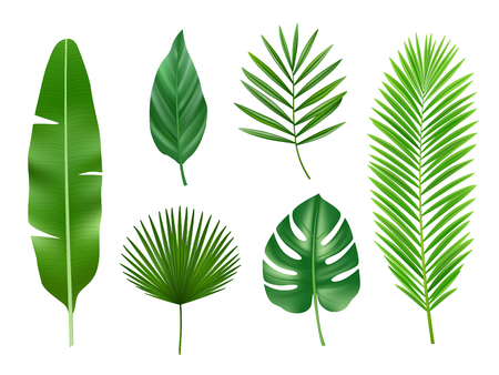 Tropical plants. Exotic eco nature green leaves vector realistic collection isolated. Exotic green leaf, tropical nature botany illustration