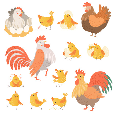Chicken and rooster. Funny domestic farm animals birds eggs pollo vector cartoon characters. Character chicken farm, rooster illustration