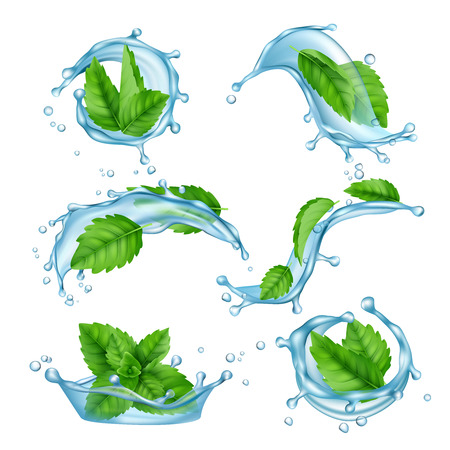 Fresh water mint. Liquid splashes with green menthol leaf for drink vector realistic collection. Illustration of menthol leaf and mint fresh